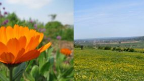 Growing Resilience in the South Downs